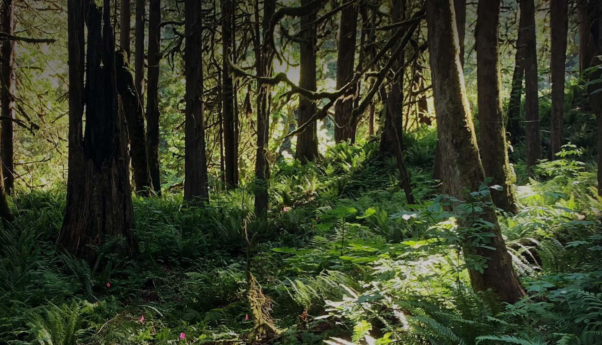 community forest trail chilliwack
